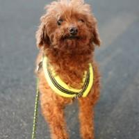 5/31(日)犬の譲渡会、物品販売:麻布十番商店街