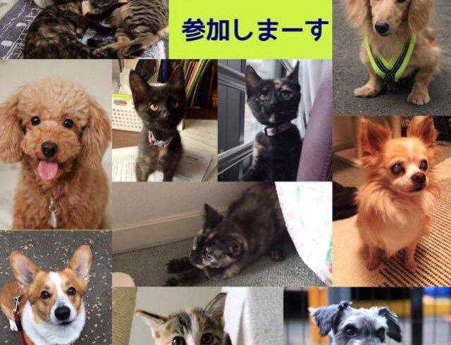 11/20(日)ぼいす譲渡会のお知らせ@川崎市動物愛護センター