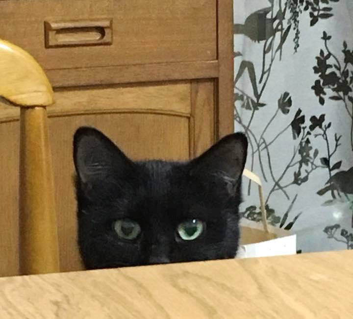 中野星子♀黒猫