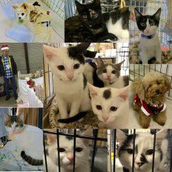 2017年1月15日(日)ぼいす譲渡会のお知らせ@川崎市動物愛護センター