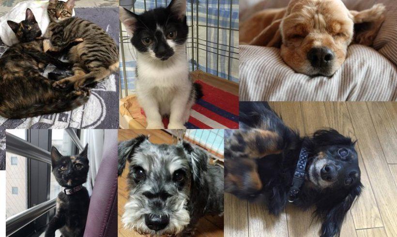 12月18日(日)ぼいす譲渡会のお知らせ@川崎市動物愛護センター