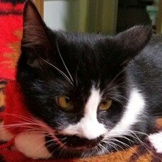 ぴかり♀白黒ネコ
