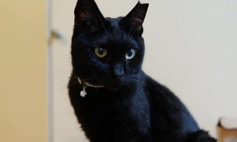 ネロ♀黒猫