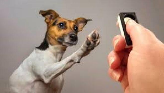 【2019年2月24日開催】ぼいす勉強会 part X「人と犬が一緒に住むうえで大切な基礎行動を、マーカー(クリッカー)を使ってわかりやすく教えましょう!」」