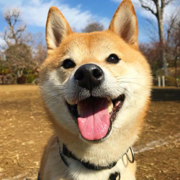 かんた♂柴犬