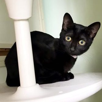 つきみ♀黒猫