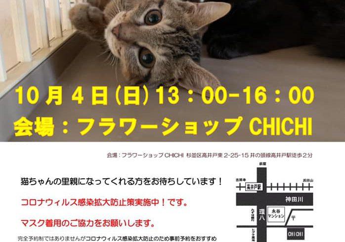 10/4(日)猫の譲渡会 in 高井戸 フラワーショップCHICHI